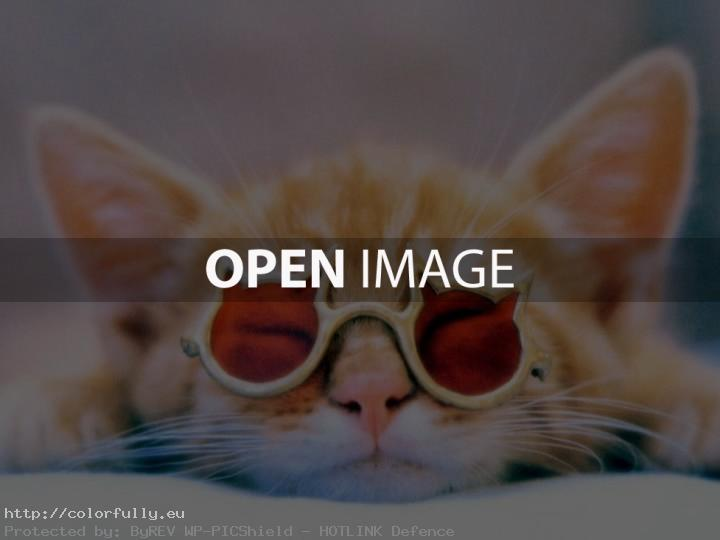 Pussycat with glasses