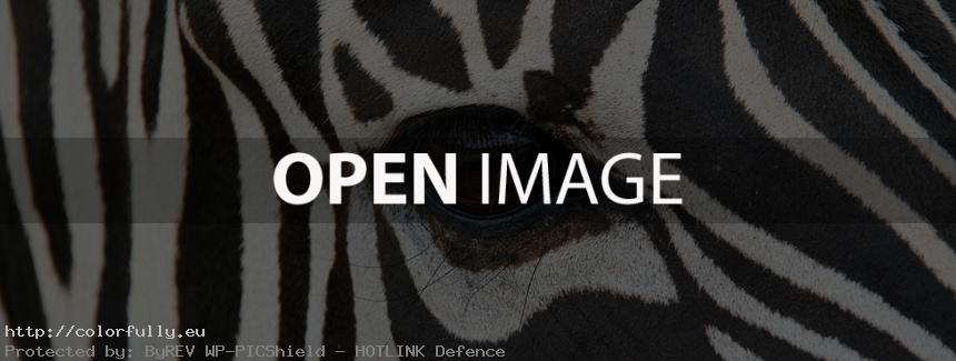 Black white zebra - Facebook Cover