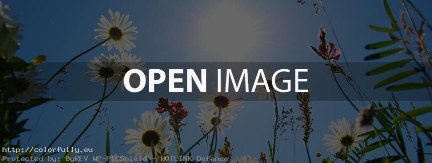 Sun and Flowers - Facebook Cover