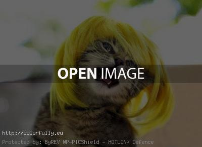 Funny blonde kitty wig