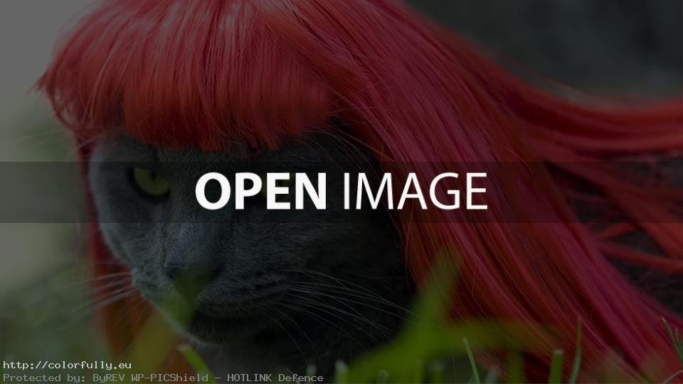 Funny pussycat with red wig