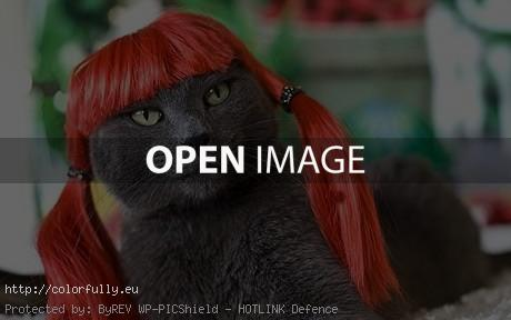 Funny redhair kitty wig