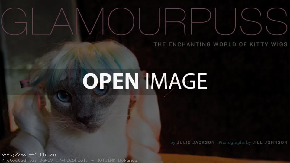 Glamourpuss – Funny pussycat with colorful wig