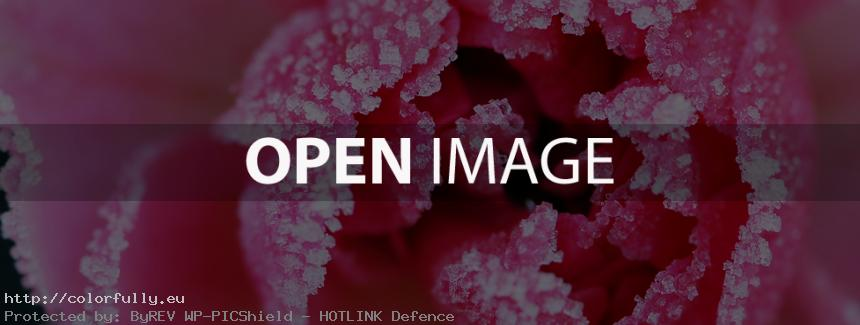 Red frozen rose - Facebook Cover