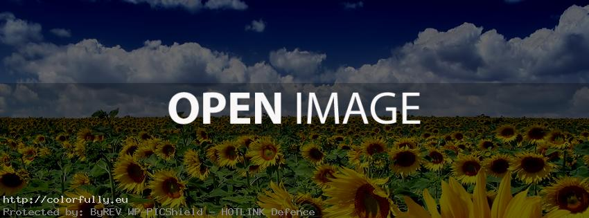 Field with sunflowers – Facebook cover