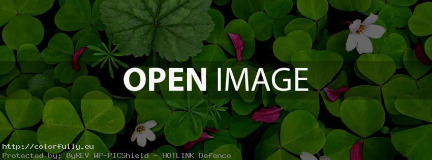 Clovers – Facebook cover