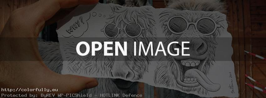 Funny donkeys – Facebook covers