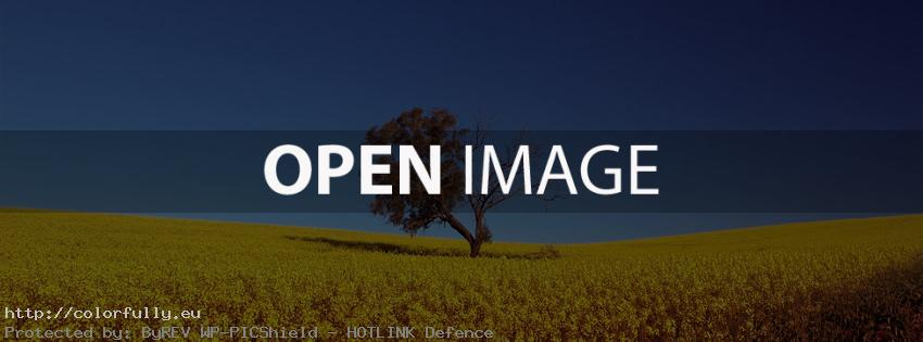 Lonely tree in yellow field – Best Facebook Covers