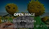 pencil-vs-camera-sunflowers-baby-crying