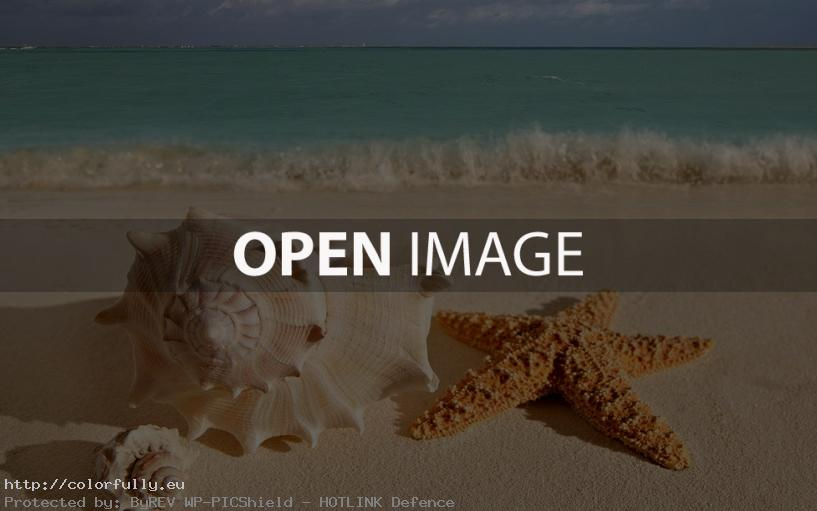 Shell, rapana, sea star…