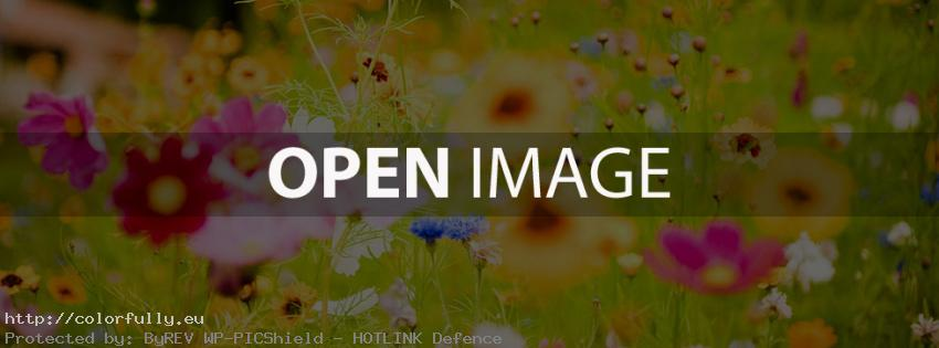 Beautiful colorful flower garden – Facebook cover