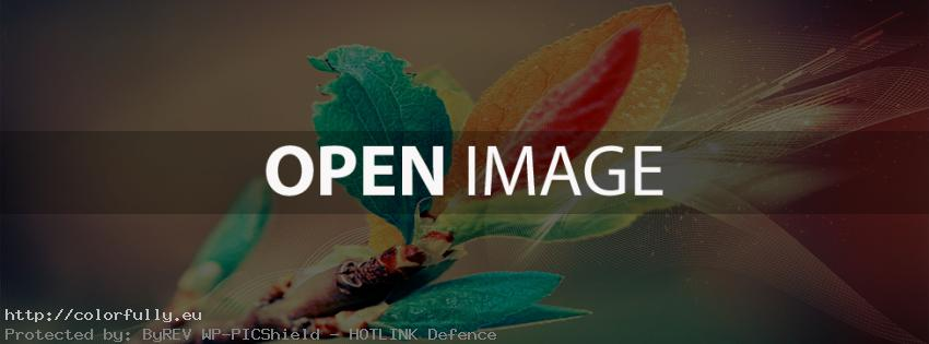 colorfully free facebook covers colorful abstract branch