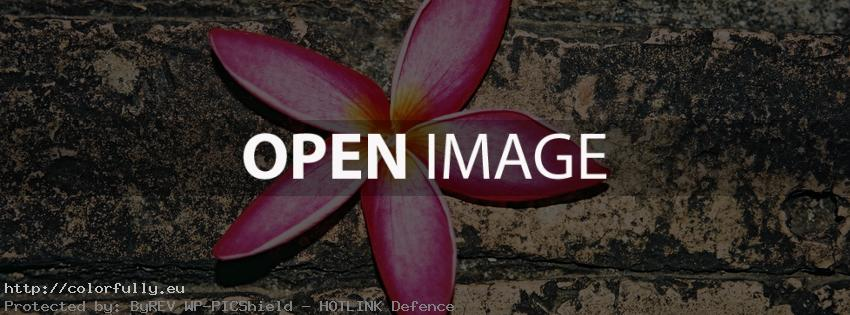 Pink flower – Facebook cover