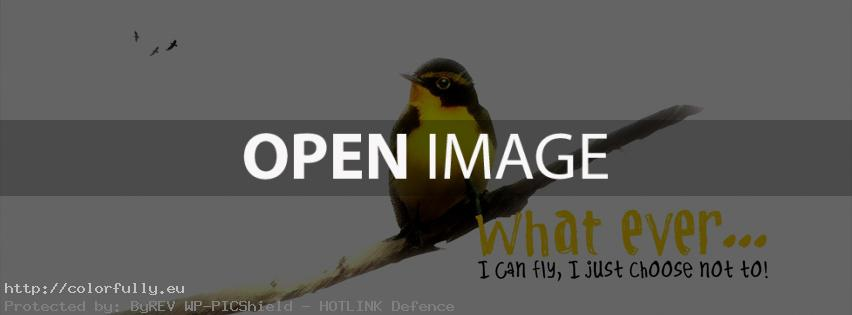 What ever… I can fly, i just choose not to! – Facebook cover