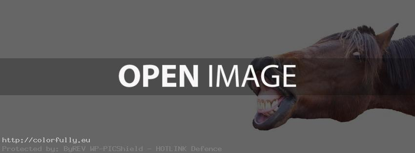 Funny horse – Facebook cover