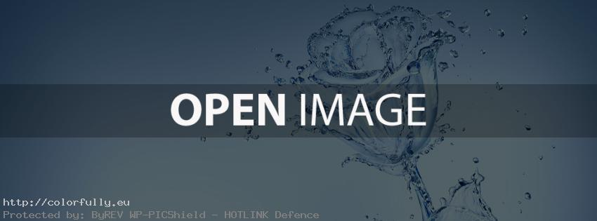 Water rose flower – Facebook cover