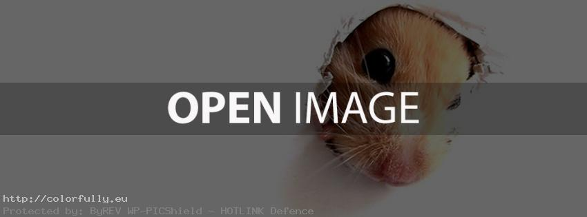 Mouse hole in your timeline – Facebook cover
