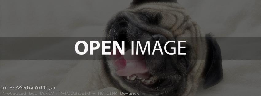 Sweet laughing dog – Facebook cover