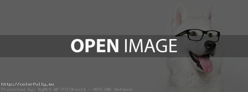 White cute dog with glasses – Facebook cover