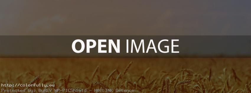 Yellow-gold wheat field – Facebook cover