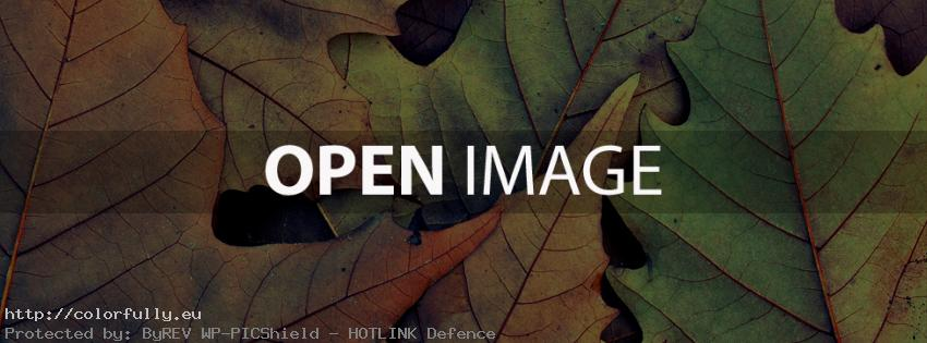 colored-autumn-oak-leaves-facebook-cover