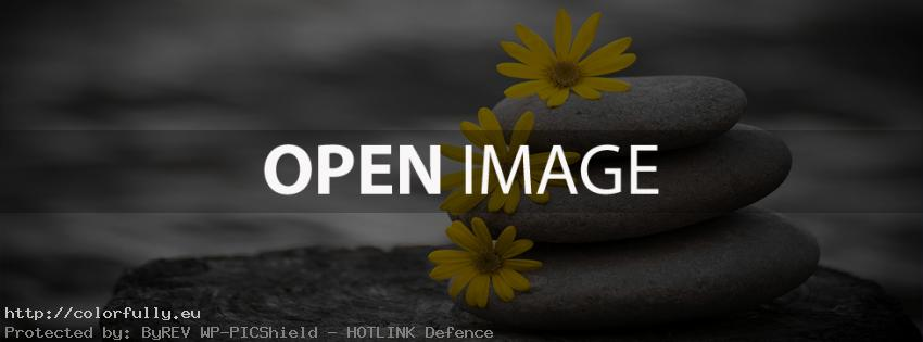 Daisy flowers on stones – Facebook timeline covers