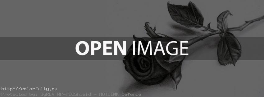 Black and white drawn rose – Facebook cover