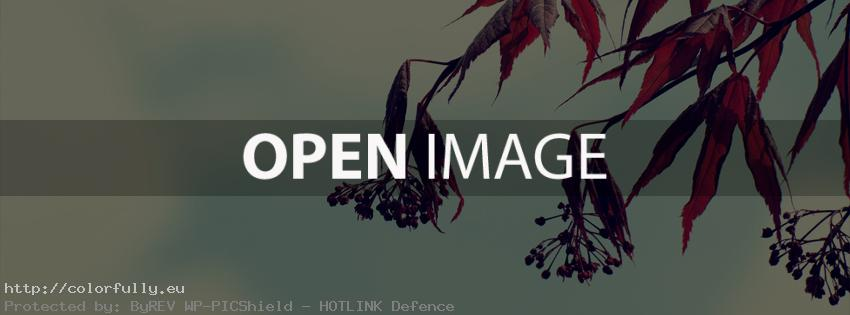 Leaves – Facebook cover
