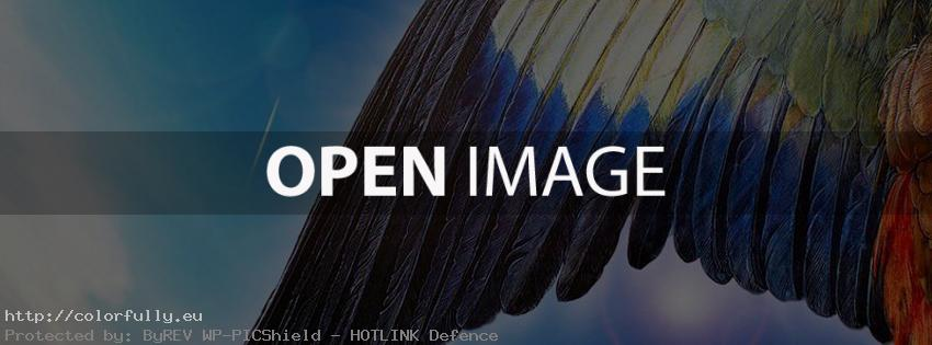 Eagle wings – Facebook cover