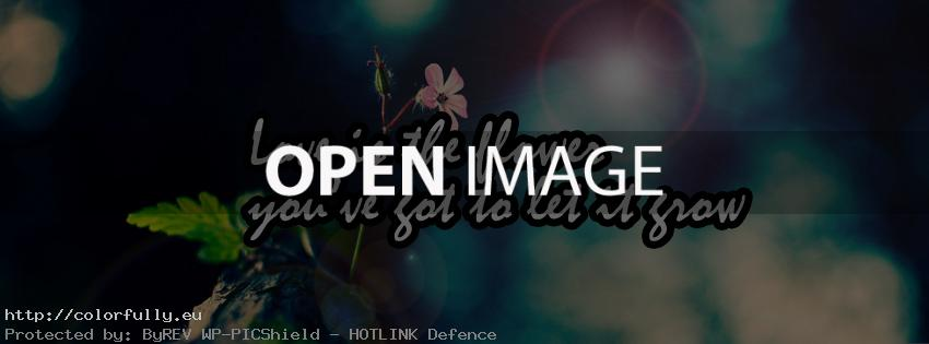 Love is the flower you have got to let it grown – Facebook cover