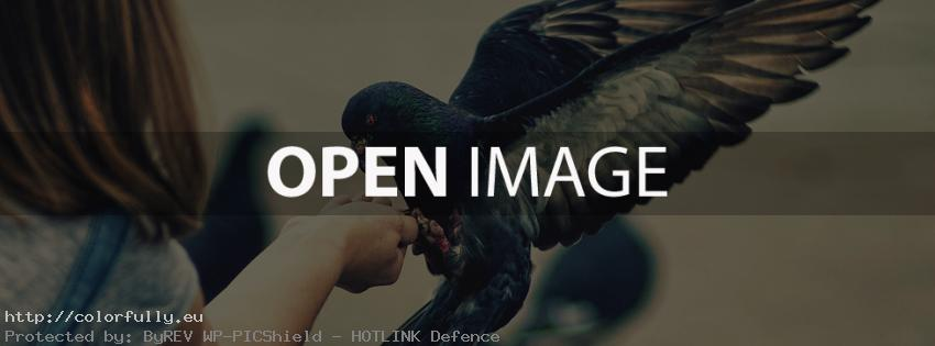 pigeon-bird-facebook-cover