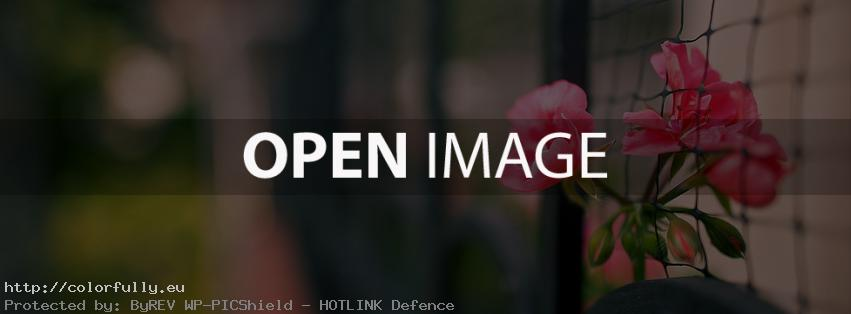 red-beautiful-flower-facebook-cover