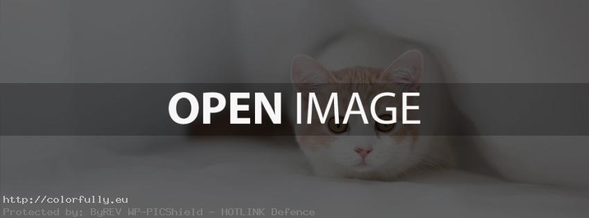 Sweet little white kitty – Facebook cover