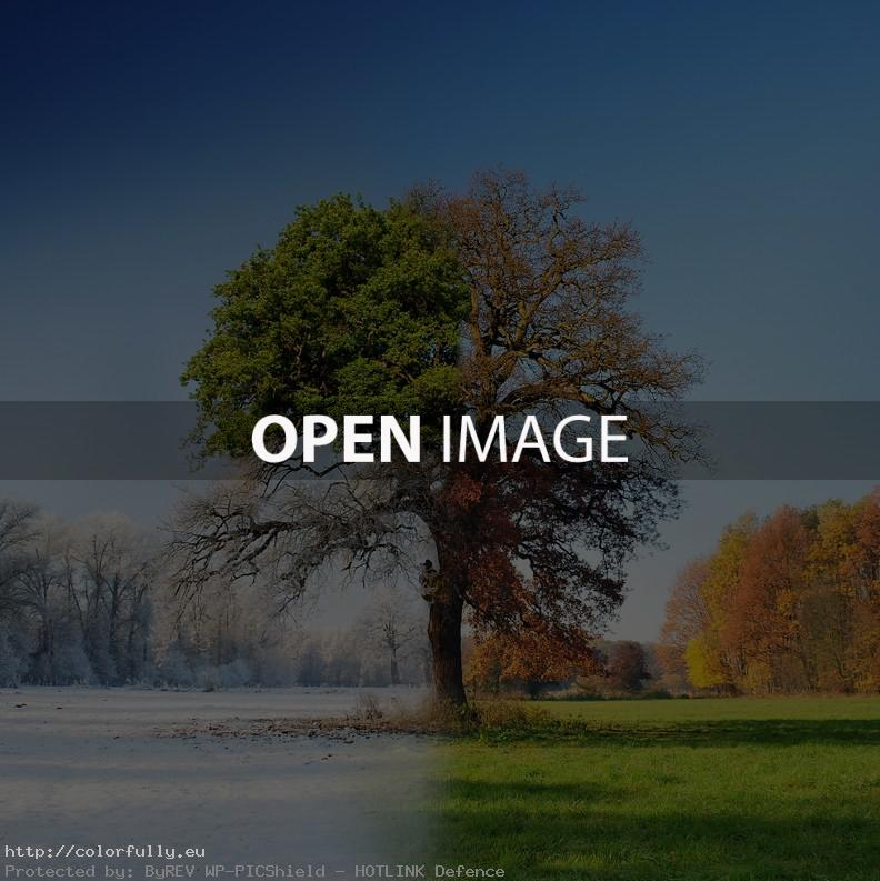Winter-autumn- spring-summer-tree