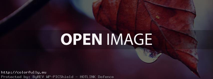 beautiful-red-autumn-fall-leaf-colored-facebook-cover