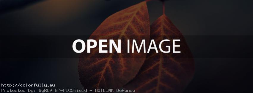 Two beautiful autumn colored leaves – Facebook cover
