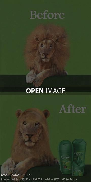 Lion shampoo – before and after
