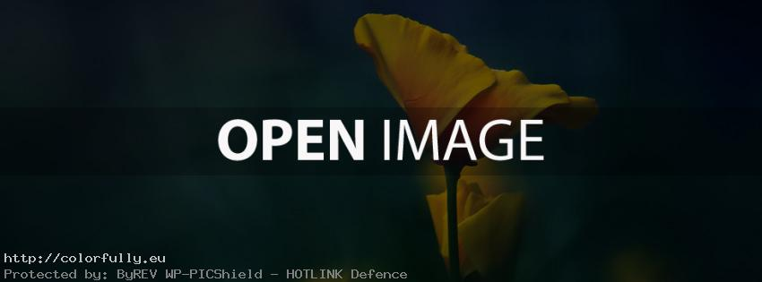 Beautiful yellow-orange flower – Facebook cover