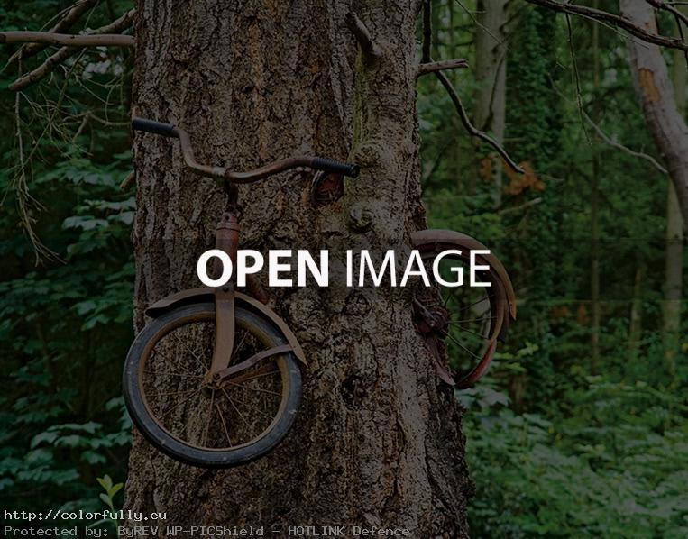 Bike in tree – Bicycle tree