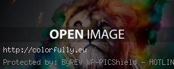 Facebook cover photo lion
