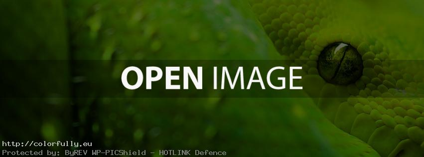 Green snake – Facebook cover