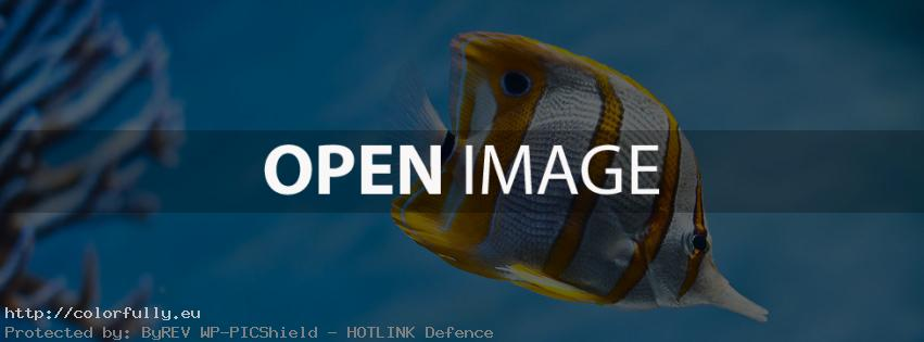 Colorful fish – Facebook cover