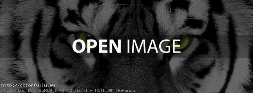 Magnetic Tiger Eyes – Facebook cover