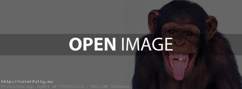 Laughing monkey – Facebook cover