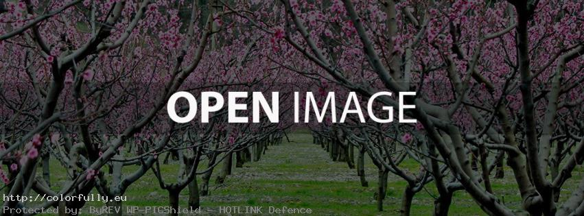 Orchard blossom – Facebook cover