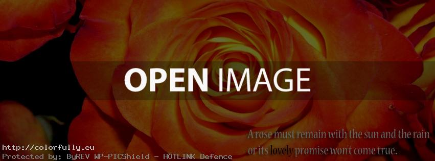 A rose must remain the sun and the rain or it's lovely promise won't come true – Facebook cover