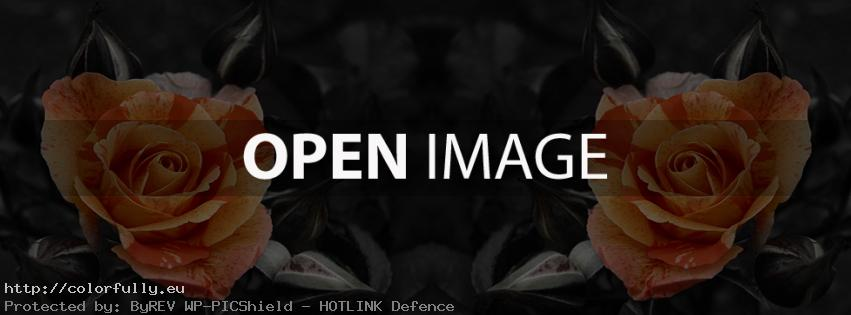 Two roses – black facebook cover