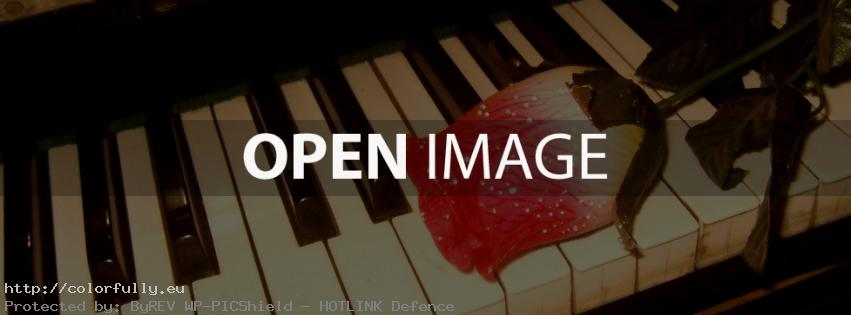 Rose on piano – Facebook cover