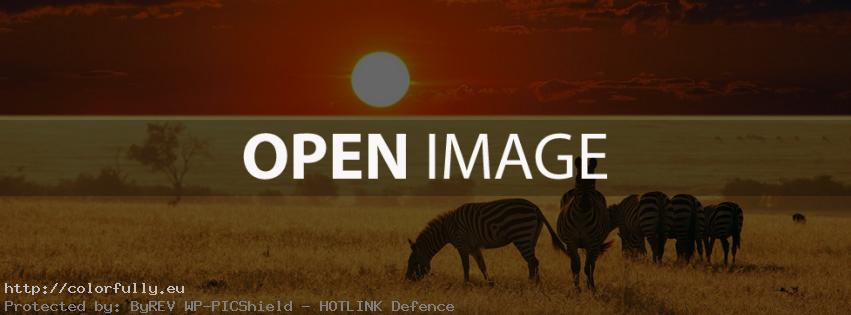 Zebras – Facebook cover
