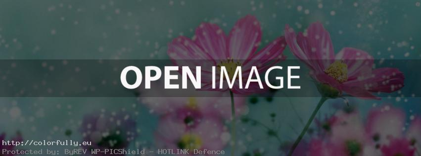 Colorful Flower – Facebook cover